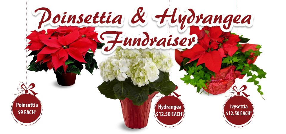 Holiday Fundraiser poinsettias,